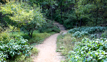 [photo]Love with Forest Trail panorama
